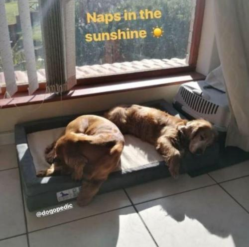 Naps in the Sunshine